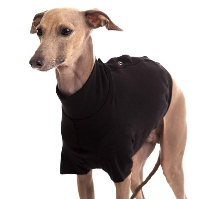 Sofa Dog - Oliver - Cotton Underwear