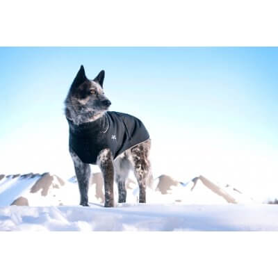 Chilly Dogs - Great White North -Warme hondenjas - Alle hondenrassen