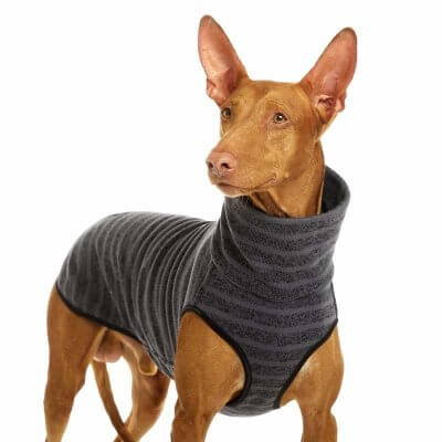 Sofa Dog - Hachico Jumper - Fleece Body