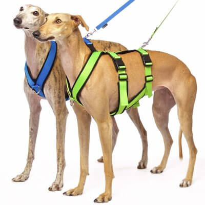 Sofa Dog - Sports Harness Double Y